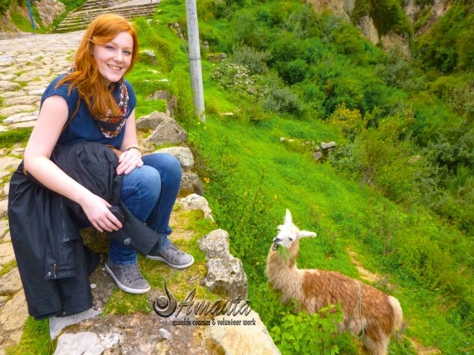 Spanish-student-in-Cusco-with-a-llama