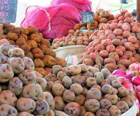 potatoes-peru-31-fun-facts