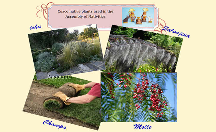 Cusco native plants for nativities