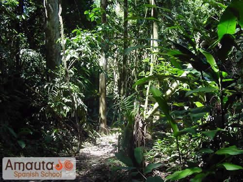 Plantas De Selva Alta: Flora And Fauna