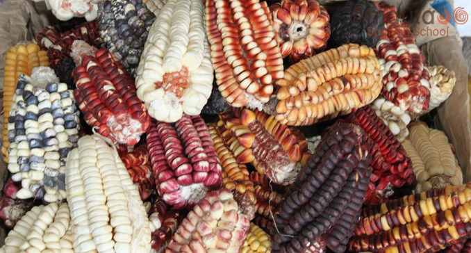 Colorful Peruvian corn on a Cusco market