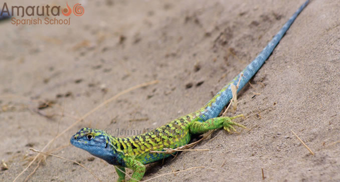 A lizard is one of the many animals to be seen in Peninsula Valdes.