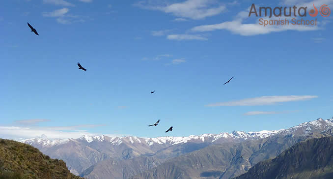 A view of Colca Canyon with condors